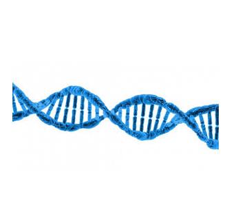 CB3 – Ein Cannabinoid-Rezeptor wird wiederentdeckt